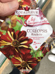 COREOPSIS ROULETTE