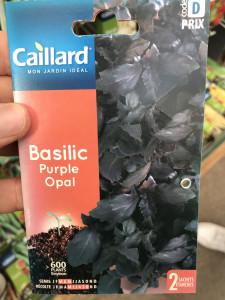 BASILIC PURPLE OPAL