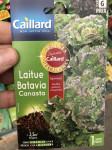 LAITUE BATAVIA CANASTA