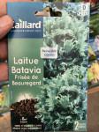 LAITUE BATAVIA FRISEE DE BEAUREGARD
