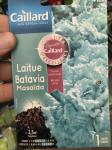 LAITUE BATAVIA MASAIDA