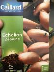 ECHALION ZEBRUNE