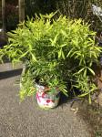 Plantes de pépinieres