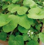 Plantes fleuries - Potager