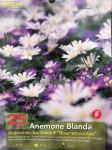 ANEMONES BLANDA EN MELANGE X25