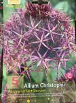 ALLIUM CHRISTOPHII (ALBOPILOSUM) X5