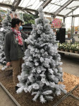 SAPIN VANCOUVER ENNEIGE 180CM