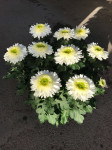 chrysantheme Anémones 10 têtes blancs coupe Ø27cm
