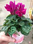 Plantes fleuries de jardin