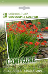CROCOSMIA LUCIFER 10/+ X10