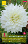 DAHLIA DECO GEANT BULL S PRID X1