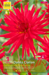 DAHLIA CACTUS BEST OF RED, RO X1
