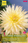DAHLIA CACTUS SHOOTING STAR C X1