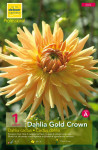 DAHLIA CACTUS GOLD CROWN, GRA X1