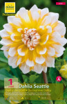 DAHLIA DECORATIF SEATTLE  CAL X1