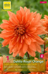 DAHLIA DECORATIF ROYAL ORANGE X1