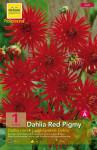 DAHLIA RED PIGMY  CAL.I X1
