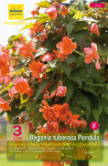 BEGONIA PENDULA ORANGE SAUMON  X3